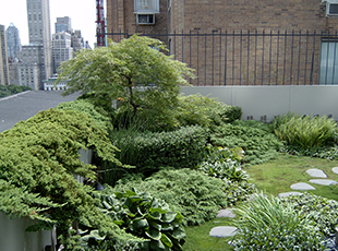 Rooftop Gardens Amid NYC's Tallest Skyscrapers